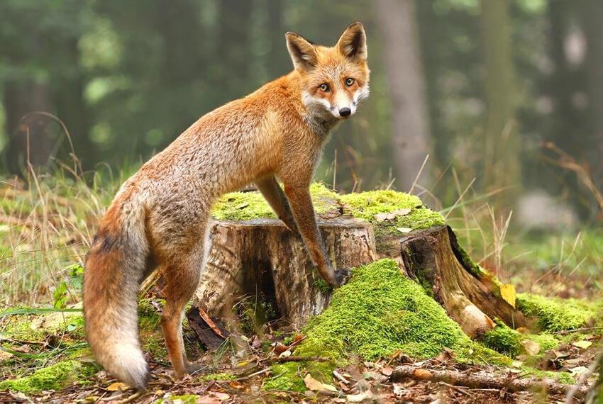 Forest Animals Rescue