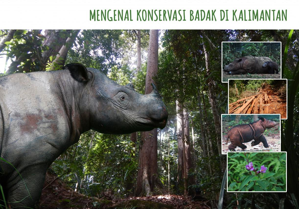 Badak Sumatera, tetapi ada di Kalimantan. Bagaimana kisahnya?