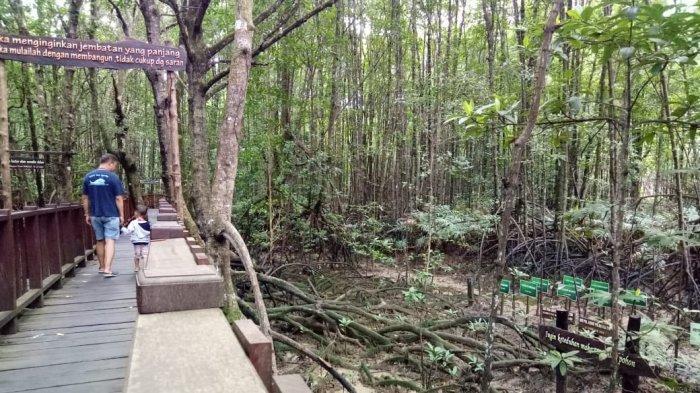 Ekowisata Mangrove Center Graha Indah Balikpapan, Cara Bertahan di Tengah Pandemi Covid-19